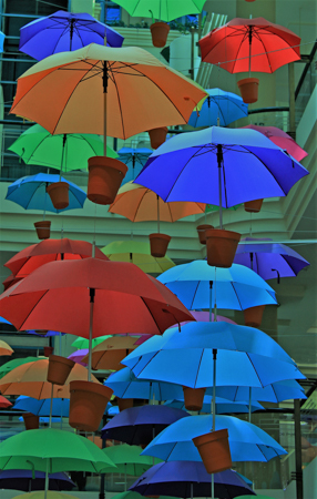 78 open umbrellas 41652395314 o